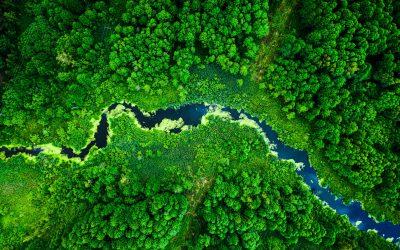 Windenergie und die Bedeutung der Wälder